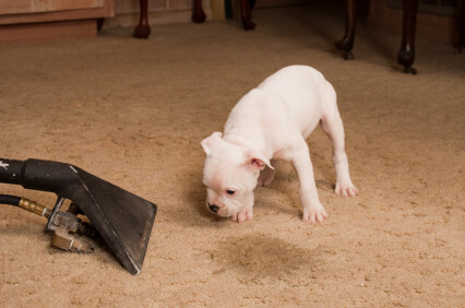 Carpet odor removal by Premier Carpet Cleaning
